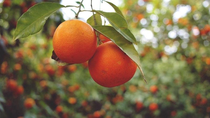 Какие витамины содержатся в апельсинах