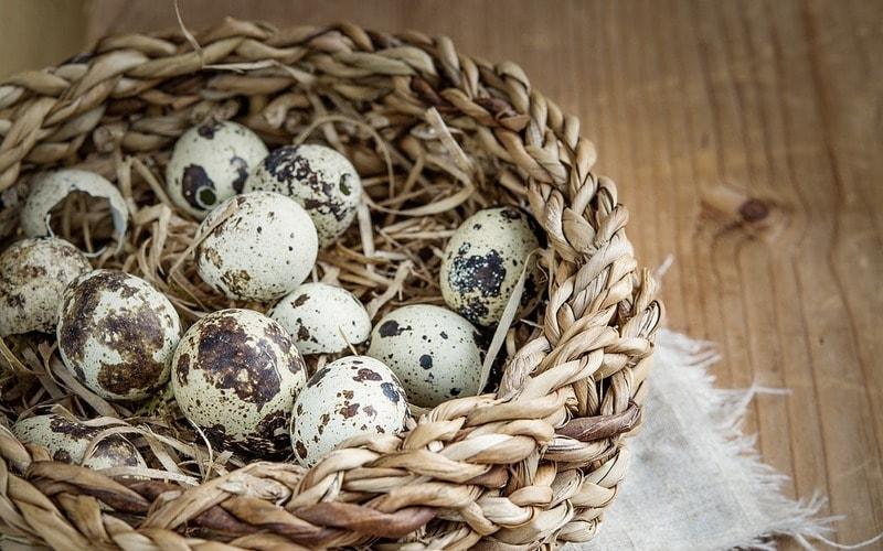 Polza_i_vred_perepelinyh_yaic_Польза и вред перепелиных яиц