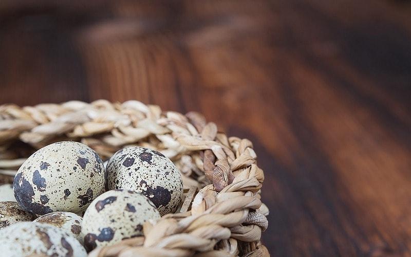 Polza_yaic_perepela_dlya_detey_Польза яиц перепела для детей