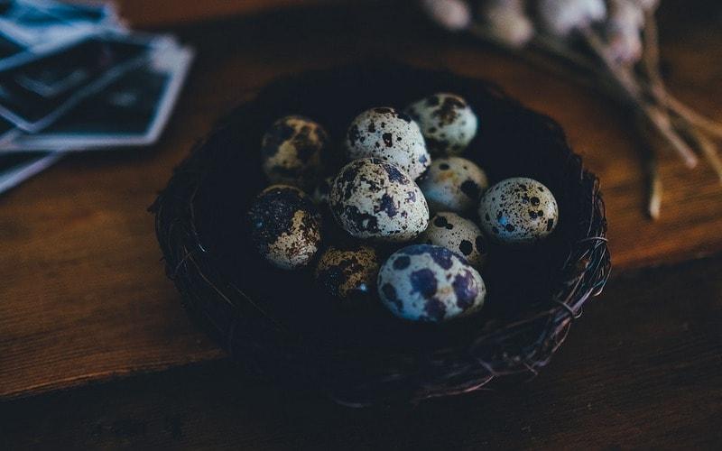 Перепелиные яйца: польза и вред для организма, как принимать