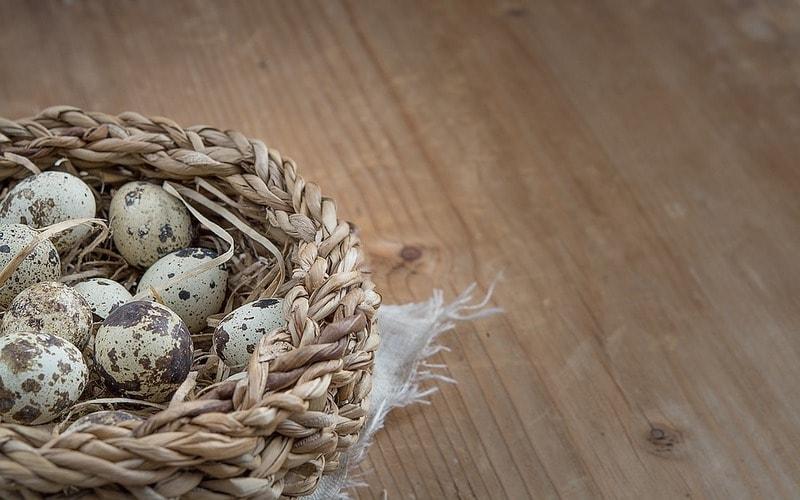Kak_varit_perepelinye_yayca_Как варить перепелиные яйца
