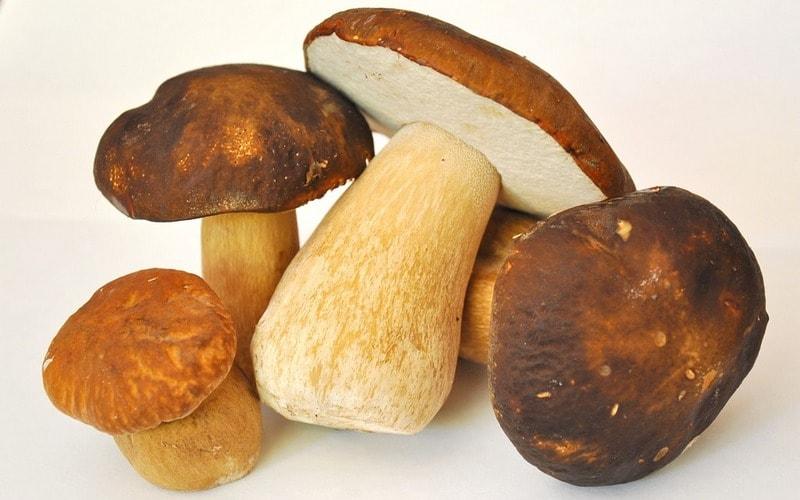 Сколько варить белые грибы боровики