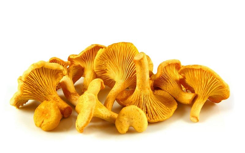 Как и сколько варить грибы лисички