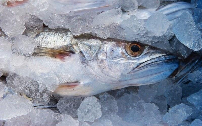 Как варить рыбу хек