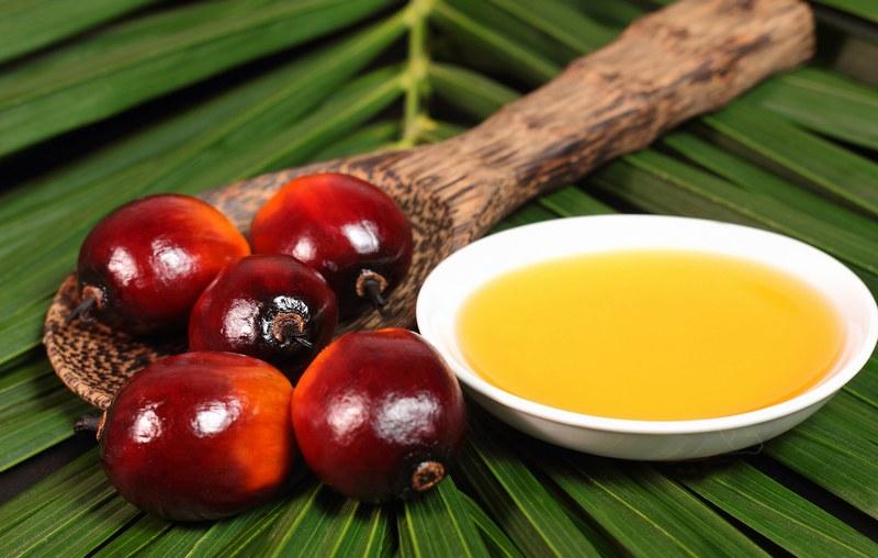 Пальмовое масло – вредно или полезно?