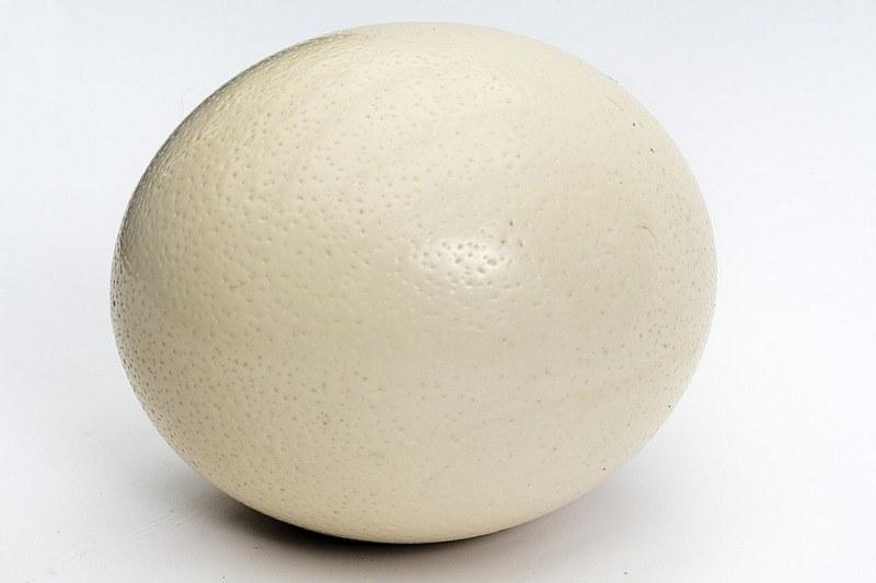 Сколько варить страусиное яйцо