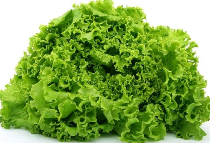 Польза салата для организма