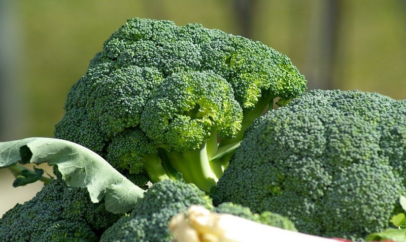 Чем полезна брокколи для здоровья человека