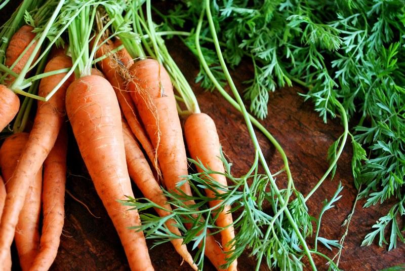 Полезные свойства ботвы моркови