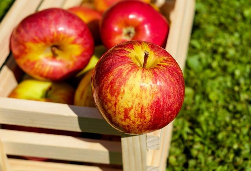 Рецепт, как сделать яблочный уксус дома