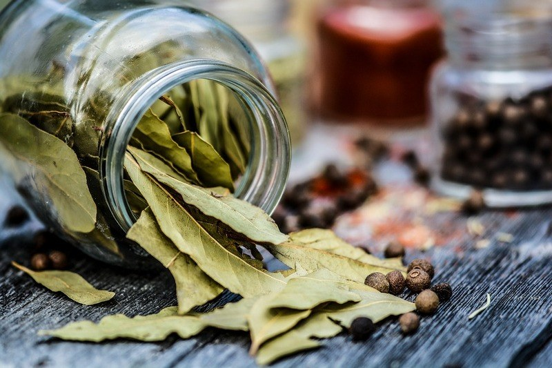Полезные свойства лаврового листа