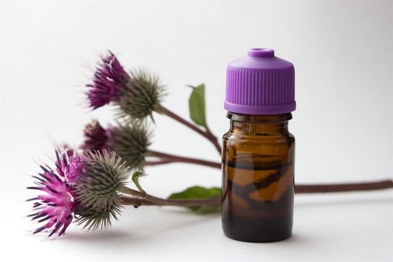 Репейное масло - польза и вред
