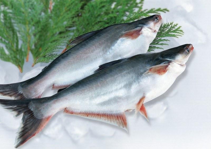 Рыба пангасиус - польза и вред