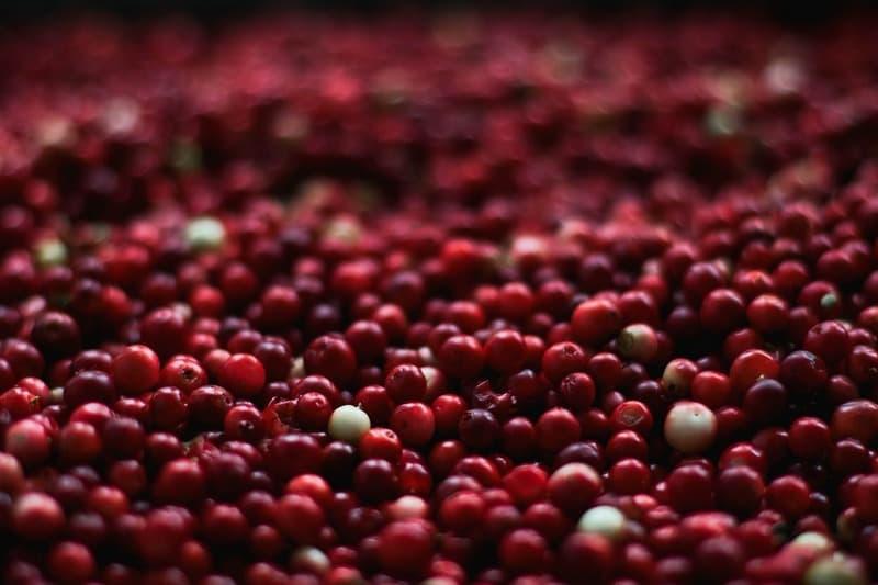Вред ягод клюквы