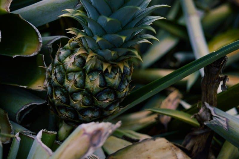 Фото маленького ананаса